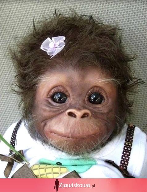 Uśmiechnięta mała małpka - 42ddeea91b24f8bdbf4cc77f521ad9d0